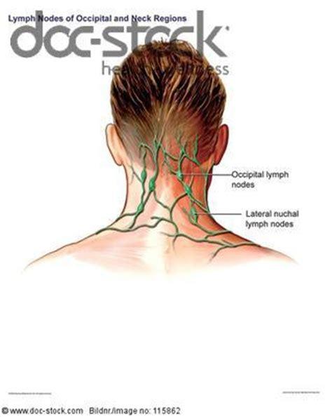 wo liegen die lymphknoten wo befinden sich die quot tastbaren quot lymphknoten nacken