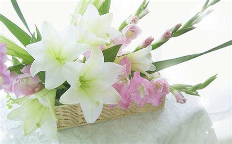 gambar merawat bunga gladiol tanaman hias flowerian foto