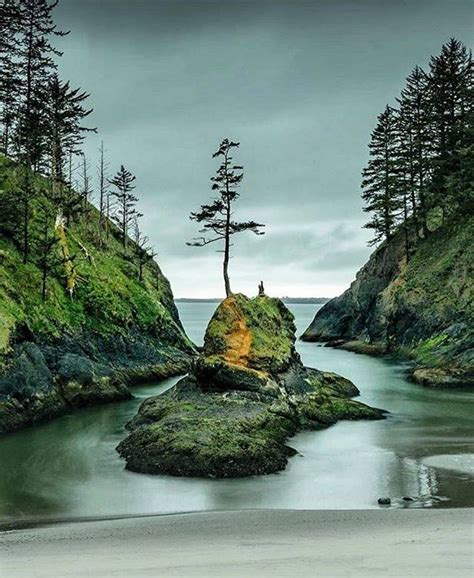 christmas trees bellingham wa 365 things to do in washington state home