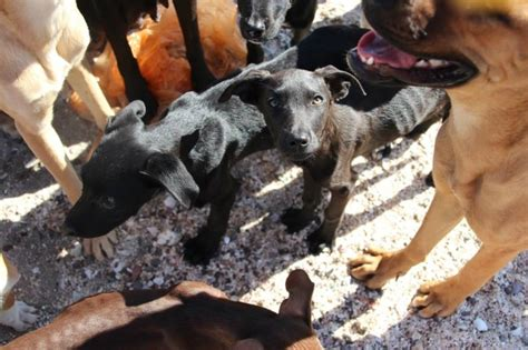 baja rescue these 34 dogs and cats were rescued from mexico by a minnesota
