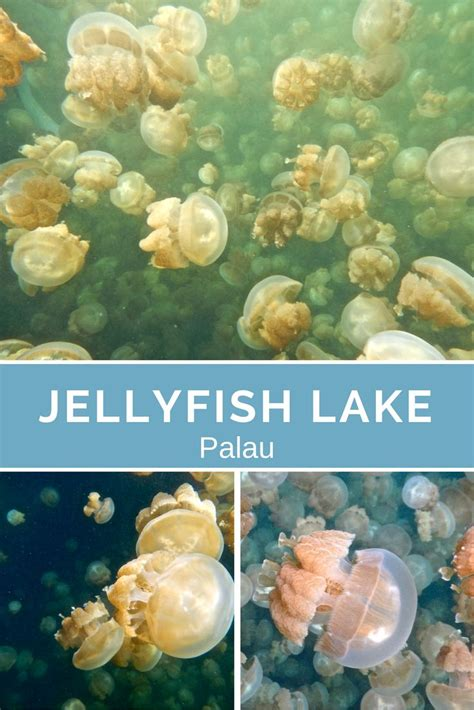 real jellyfish lava l 76 best the best of erika s travels images on pinterest