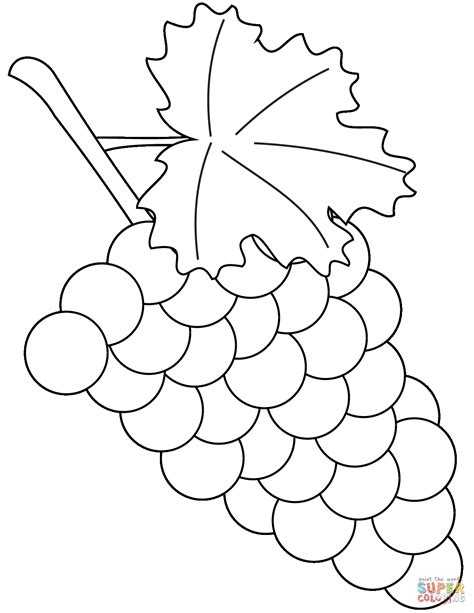 grape leaves coloring page full size of coloring pagesgrapes pages grape 11 page