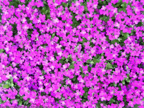 wallpaper small flower flower photos august 2011