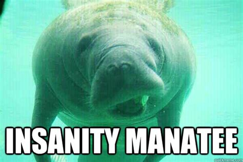 Manatee Meme - manatee meme 28 images don t panic calming manatees