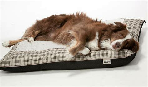 stuft dog bed stuft pillow dog bed r2ppet stuft pet beds pinterest