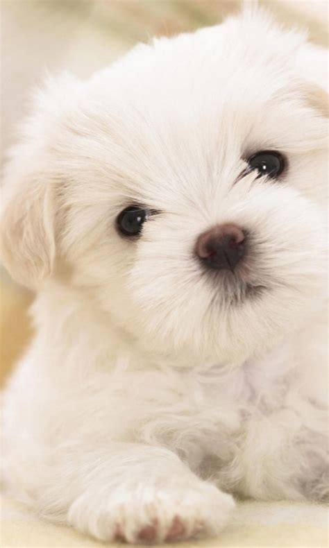 puppy screensavers wallpapers and screensavers wallpapersafari