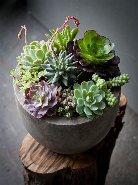 indoor succulent plants www pixshark com images galleries with a bite