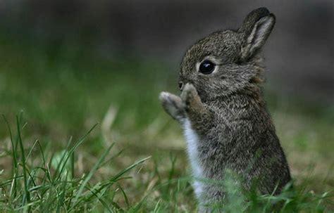 imagenes animales bebes 25 fotos de animales beb 233 s que te derretir 225 n el coraz 243 n