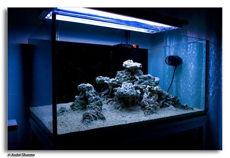 diy aquascape love this gonna do some rock rearranging todaaaay are you salty pinterest