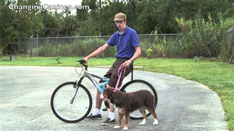how to your to run with a bike changing canines running your while your bike