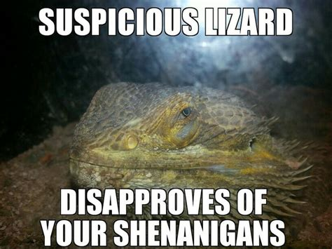 Lizard Meme - 17 best images about my memes on pinterest hey girl