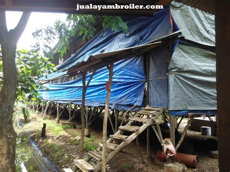 Jual Bibit Ayam Broiler Tangerang jual ayam broiler di bogor jual ayam broiler