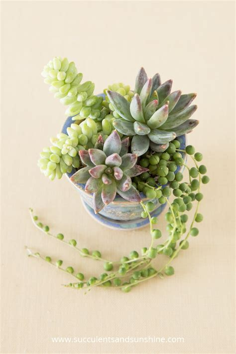 succulent pots tips for planting succulents in containers succulents