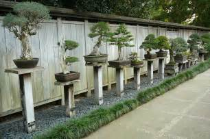 1000 images about bonsai display ideas on pinterest