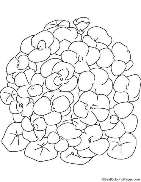 coloring pages of bunch of flowers bunch of nasturtium flower coloring page download free