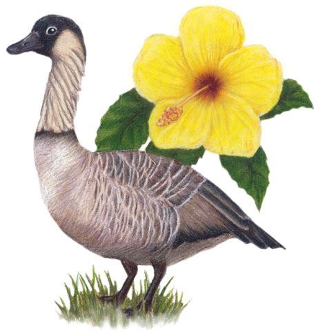 hawaii state bird and flower nene yellow hibiscus