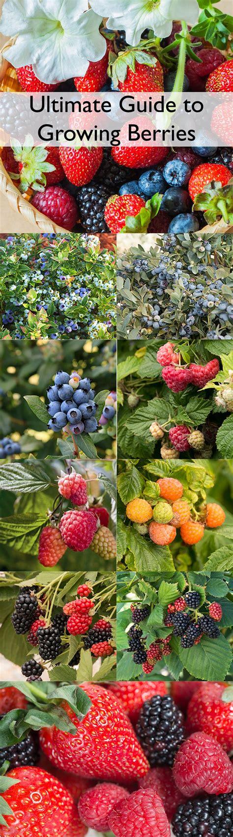 edible plants in your backyard 25 b 228 sta edible garden id 233 erna p 229 pinterest odlat