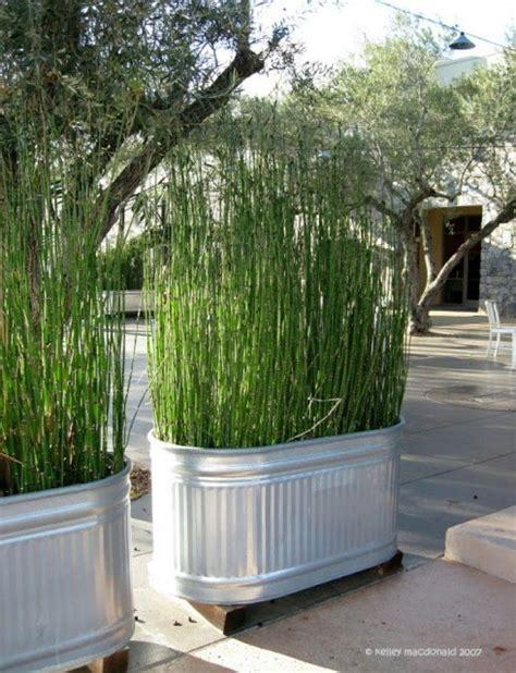 Pflanzen Als Sichtschutz Für Terrasse by Die Besten 17 Ideen Zu Balkon Sichtschutz Auf