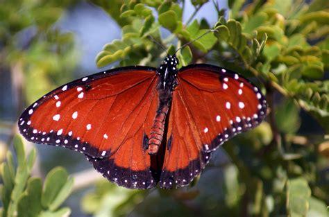 Spring Butterfly Exhibit At Desert Botanical Garden Botanical Gardens Butterfly Exhibit