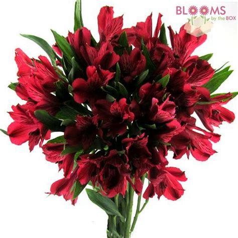 Orchids In Vases Red Alstroemeria Fresh Cut Flowers Blooms By The Box