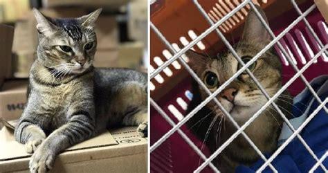 Setelah Cat Boy Kasihan Didakwa Mencederakan Seorang Kanak Kanak