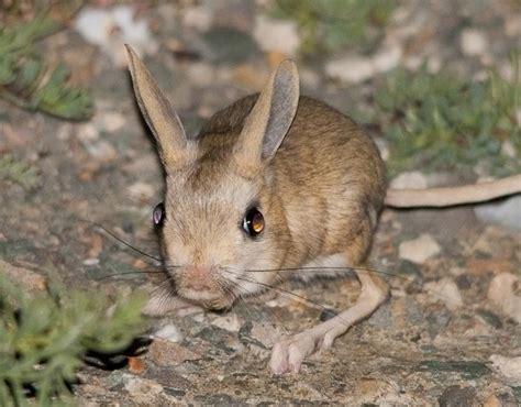 tropical desert animals and plants desert desert plants animals defenders wildlife