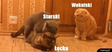 lalka streszczenie memy koty koty memy koty memy pl