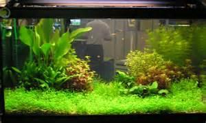 My Fresh Water Aquarium   Natural Planted Tank (Walstad Method