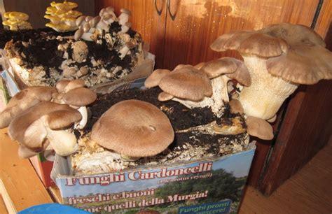funghi coltivati in casa bymek it funghi a casa