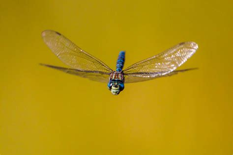 dragonfly christopher martin photography