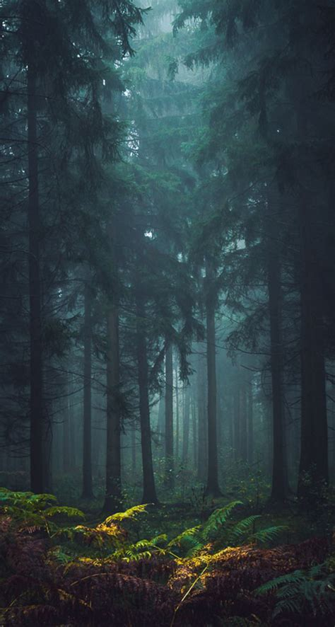misty forest  iphone wallpapers
