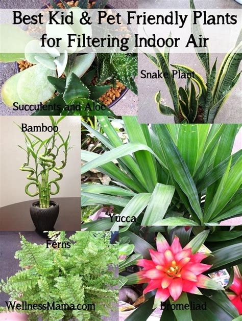 best indoor plants for clean air how to improve indoor air quality naturally best kid and pet friendly plants for filtering