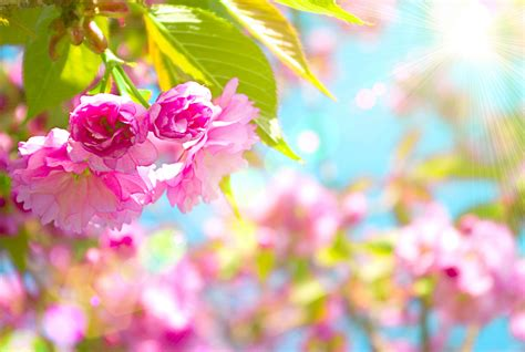 free wallpaper gallery pretty spring computer wallpaper 54 images