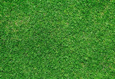Grass L by Bermudagrass Information Thriftyfun