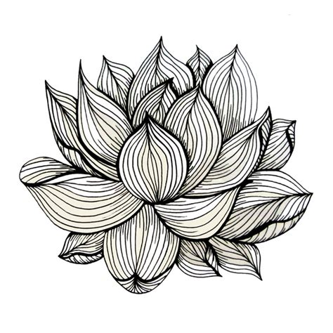 Organic Sketchy Lines by Lotus Flower Black And White Nature Organic Design