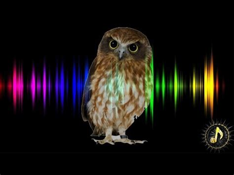 659 2 mb free sound owl mp3 mp3 mp3 for free