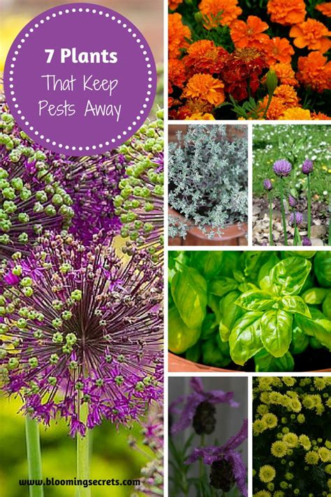 plants that keep bugs away from garden 28 images