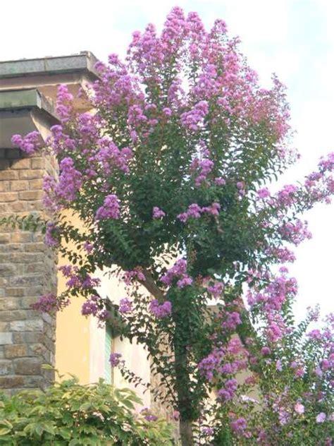 alberelli da giardino sempreverdi la finestra di stefania come scegliere un albero da
