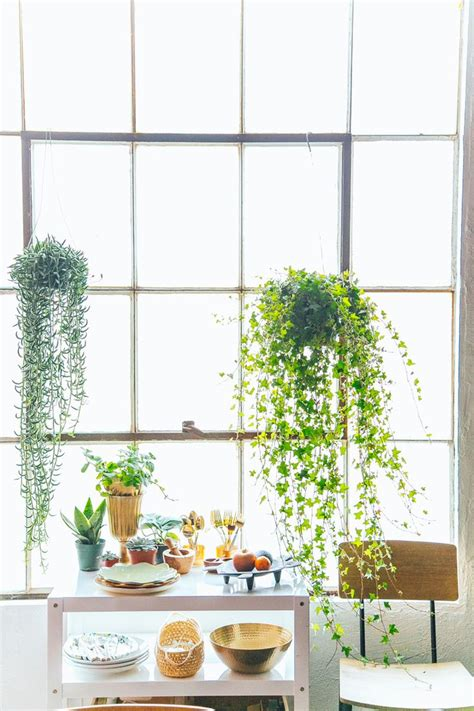 Window Plant Hanger - this studio is only 700 sq ft but high ceilings