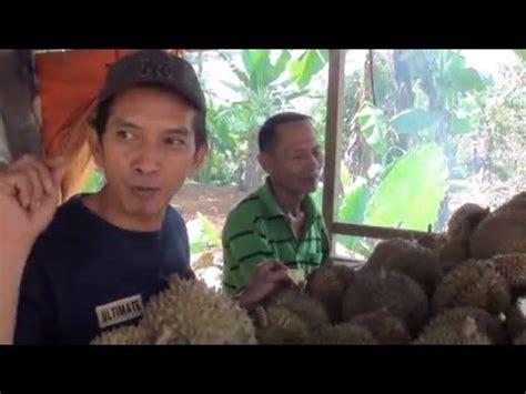 Bibit Durian Bawor Di Banyumas budidaya durian bawor dan monthong di kemranjen banyumas