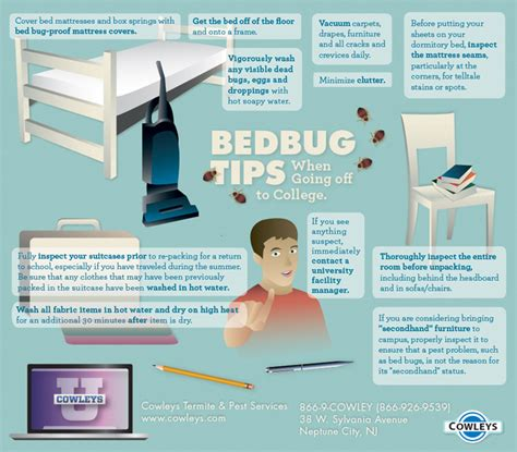 cost of bed bug treatment bed bugs in college dorms tips for prevention treatment