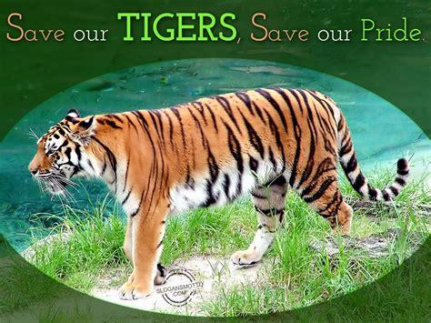 tiger biography in english slogans for saving animals