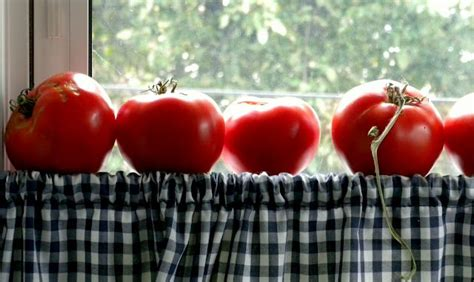 Windowsill Tomatoes Tomatoes In The Window Country Living