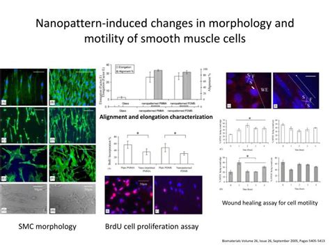 Polymer Morphology Principles Characterization And Processing ppt cell and tissue engineering nanotechnology powerpoint presentation id 1241168