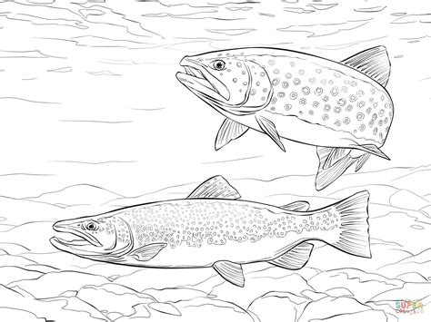 brown trout coloring page free printable coloring pages