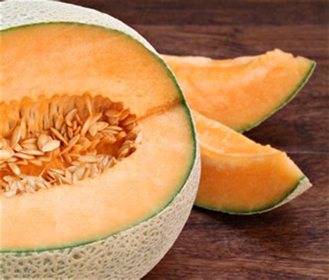 cantaloupe for dogs is cantaloupe safe for dogs and cats