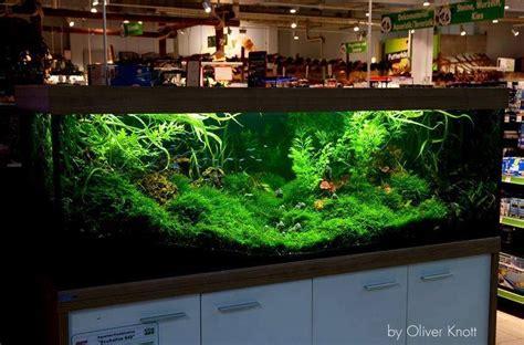 setup aquascape 1000 images about planted aquariums on pinterest