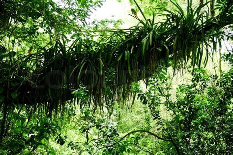 dschungel pflanzen gr 252 nen dschungel pflanzen im tropischen stockfoto