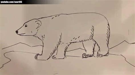 imagenes de oso para dibujar a lapiz como dibujar un oso polar youtube