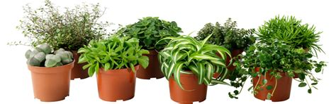 the best plants to bring life to your bathroom bring your potted plants inside for winter the crabby nook